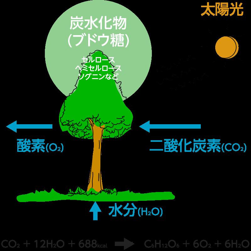 樹木の生命活動